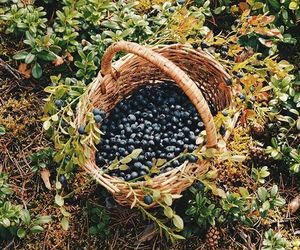 blueberry and basket image