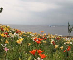 field, flowers, and sea image