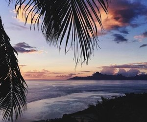 beauty, dawn, and palms image