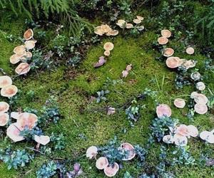 mushroom, nature, and fairy image