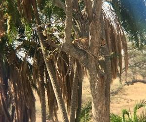 africa, leopard, and safari image