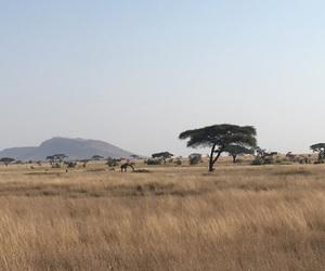 africa, giraffe, and safari image