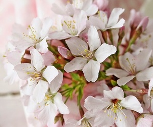 cherry blossom, spring, and flowers image