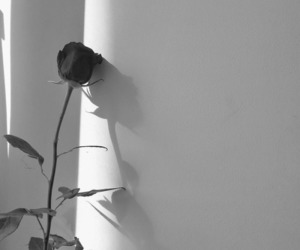 alternative, black and white, and rose image