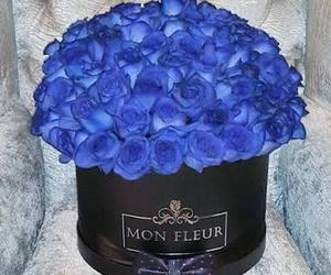 blue, rosas, and roses image