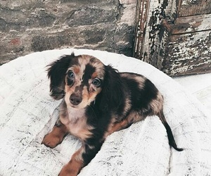 dog, adorable, and aesthetic image