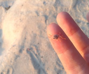 ocean, babycrab, and sand image