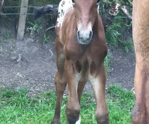 baby, foal, and equestrian image