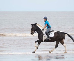 beach, horse, and ride image
