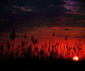 sun, photography, and sunset image