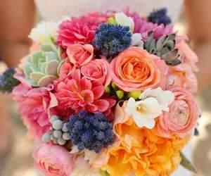 boda, colors, and wedding image