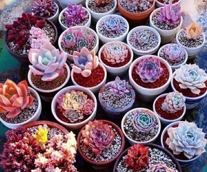 plants, flowers, and cactus image