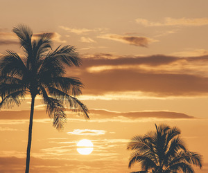 nature, palm trees, and palms image