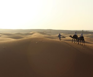 beauty, camel, and desert image