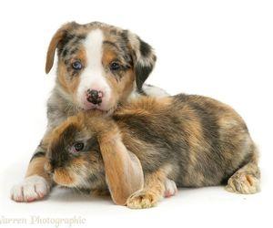 dog, bunny, and rabbit image