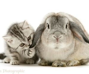 baby animals, bunny, and cats image