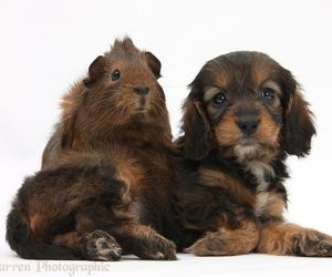 baby animals, puppy, and dogs image