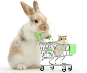 bunny, baby animals, and cute animals image