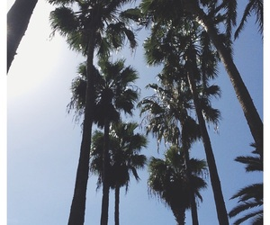 inspo, sun, and palms image