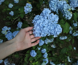 blue, flowers, and hand image