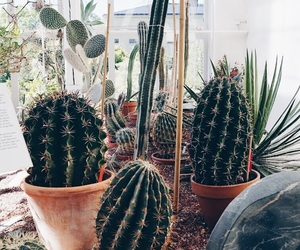cactus, cactuses, and decor image