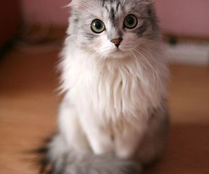 animal, beautiful, and cat image