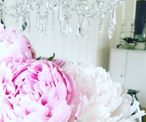 flowers, girly, and home image