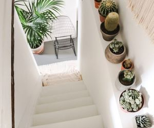 cactus, interior, and plants image