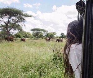 adventure, animals, and jungle image