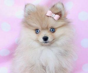 adorable, cutie, and kawaii image