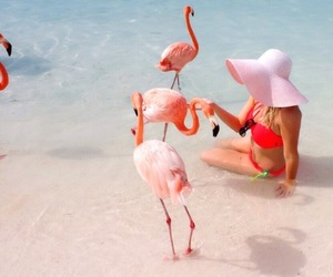 adventure, flamingo, and girl image