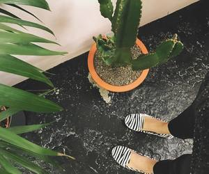 cactus, girl, and shoes image