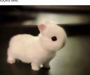 adorable, animals, and fluffy image