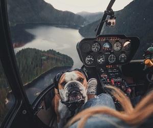 dog, animal, and travel image