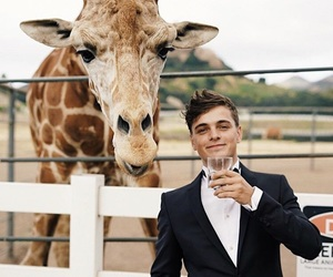 martin garrix, dj, and animal image