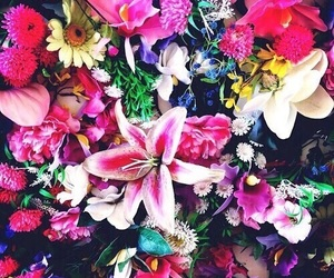 flowers, pink, and bright image