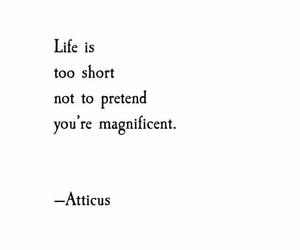atticus, life, and quote image