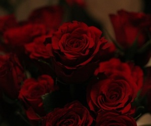 rose, beautiful, and red image