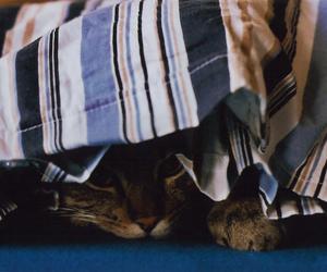 cat, analog, and animal image