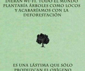 green, medio ambiente, and tree image