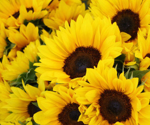 aesthetic, yellow, and flower image