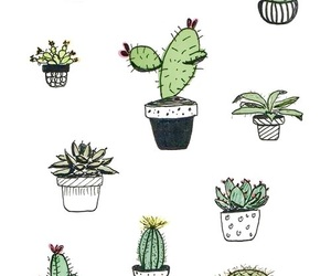 cactus, background, and plants image