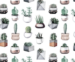 cacti, cactus, and nature image