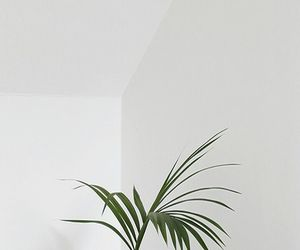 plants, white, and wallpaper image