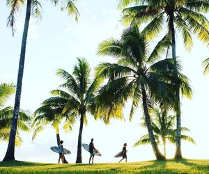 palm trees, beach, and surf image