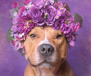 baby, dog, and flowers image