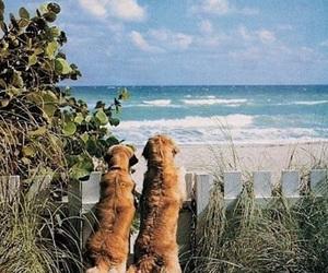 beach, beautiful, and fun image