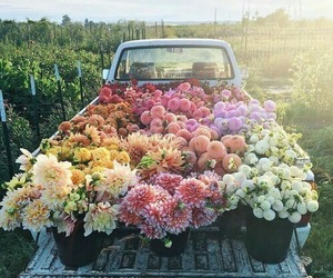 flowers, nature, and car image