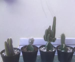 aesthetic, cactus, and dark image