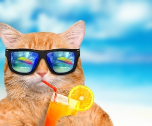beach, cat, and summer image